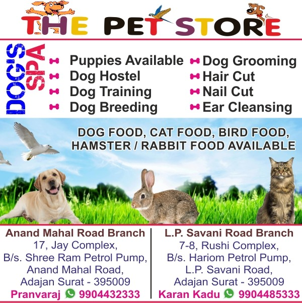 Pet Care in Surat | Tachukdi Ad (www.tachukdiad.com)